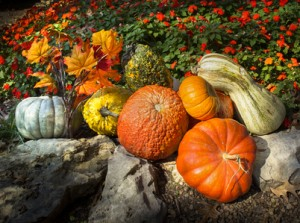Pumpkins Gords Autumn Leaves Late Blooming Flowers Say Thanksgiving